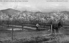 Orchard and Plow, Napa Valley, Spring